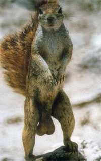 http://www.woodytone.com/wp-content/uploads/2012/11/squirrel.jpg